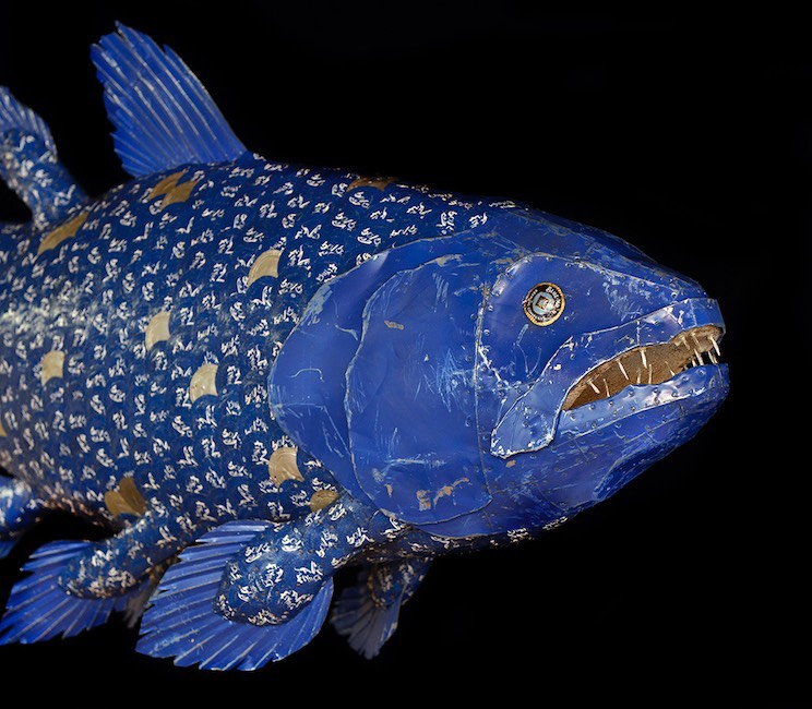 Blue Coelacanth (detail)