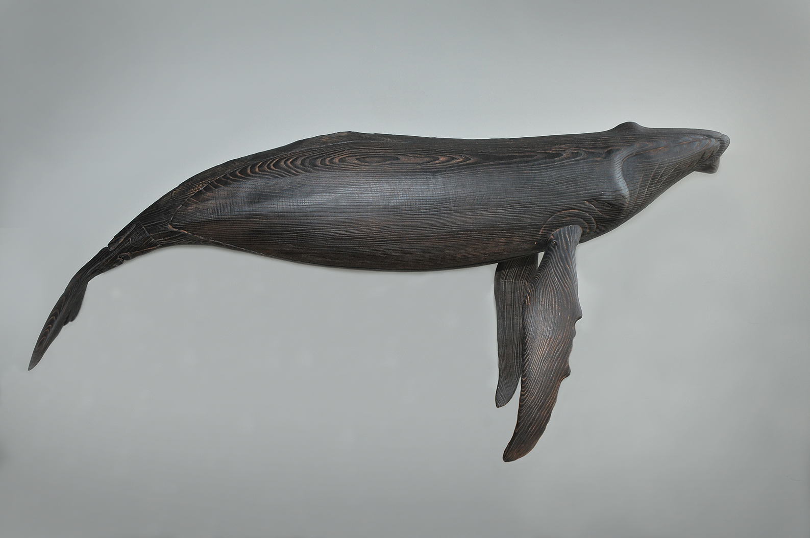 "Humpback Whale, length 53"", charred ash"