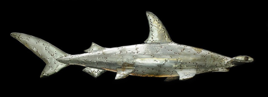 "Hammerhead Shark, 69"", galvanized sheet steel over wood, fossilized shark teeth"